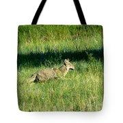 Coyote In Boulder Higlands Tote Bag