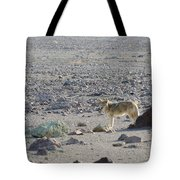 Coyote In Death Valley National Park -a Tote Bag
