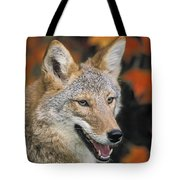 Coyote In Maple Tote Bag