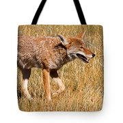 Coyote In Rocky Mountain National Park Tote Bag