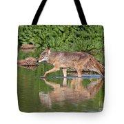 Coyote Looking For Breakfast Tote Bag