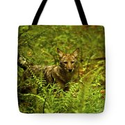 Coyote Of The Woods Tote Bag
