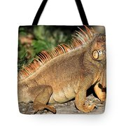 Cozumel Iguana Vacation Tote Bag
