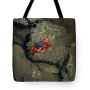 Crab Cake Tote Bag