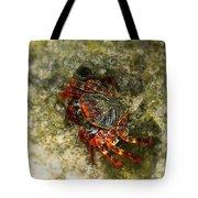 Crab In Cozumel Tote Bag