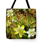 Cream Cups In Antelope Valley California Poppy Reserve Near Lancaster-california  Tote Bag