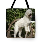 Cream Labradoodle On Wooden Chair Tote Bag