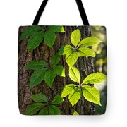 Creeper Leaves Under The Sun Tote Bag