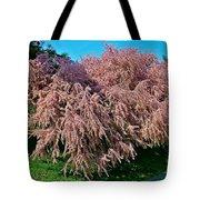 Crepey Myrtle Tree In Istanbul-turkey Tote Bag