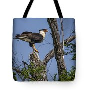Crested Caracara Tote Bag