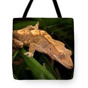 Crested Gecko Rhacodactylus Ciliatus Tote Bag