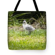 Crested Tern Chick - Montague Island - Australia Tote Bag