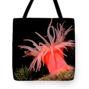 Crimson Anemone Cribrinopsis Fernaldi Tote Bag