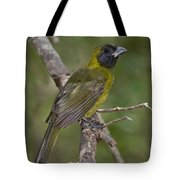 Crimson-collared Grosbeak Tote Bag