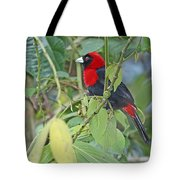 Crimson-collared Tanager Tote Bag