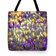 Crocus Field Tote Bag