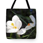 Crocus Flower Basking In Sunlight Tote Bag by Elena Elisseeva