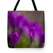 Crocus Purple Haze Tote Bag