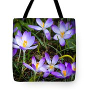 Crocuses Tote Bag