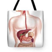 Cross Section Of Human Digestive System Tote Bag