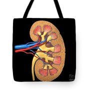 Cross Section Of Human Kidney On Black Tote Bag