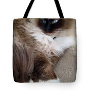 Crossed Paws Tote Bag
