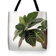 Croton Houseplant Tote Bag