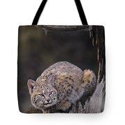 Crouching Bobcat Montana Wildlife Tote Bag