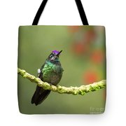 Crowned Hummingbird Tote Bag