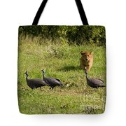 Cub And Toys Tote Bag