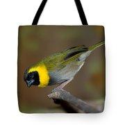 Cuban Melodius Finch Tote Bag