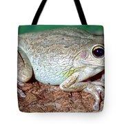 Cuban Tree Frog Osteopilus Tote Bag