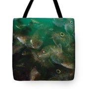 Cunner Fish Nova Scotia Tote Bag