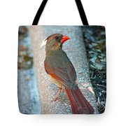 Curious Cardinal Tote Bag