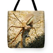 Curious One Tote Bag