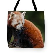 Curious Critter Tote Bag