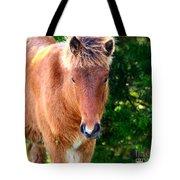 Curious Foal Tote Bag