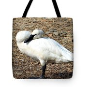 Curious Gracie Eyeballs The Camera Tote Bag