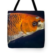 Curious Koi Tote Bag