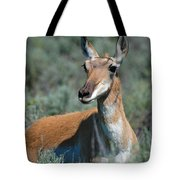 Curious Pronghorn Tote Bag