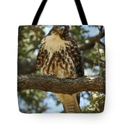 Curious Redtail Tote Bag