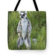 Curious Ring-tail Tote Bag