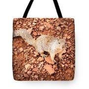 Curious Squirrel 2 Tote Bag