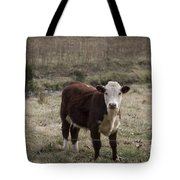 Curious Tote Bag