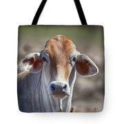 Curious V5 Tote Bag