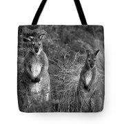 Curious Wallabies Tote Bag