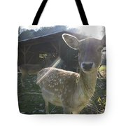 Curious Young Deer Tote Bag