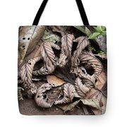 Curled Leaves Tote Bag
