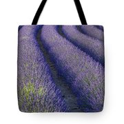 Curved Rows Tote Bag