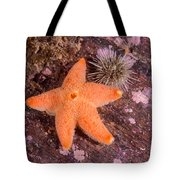 Cushion Winged Sea Star Tote Bag